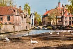 Cygnes à Bruges Image libre de droits