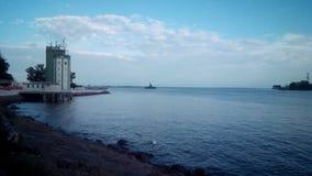 Cygnes à la mer baltique Images stock
