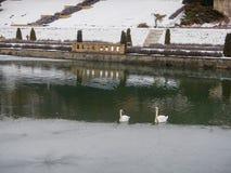 Cygnes au lac au château hrady de nove Image stock