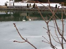 Cygnes au lac au château hrady de nove Photographie stock libre de droits