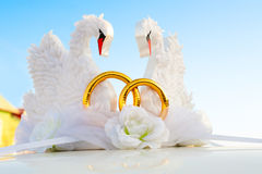 Cygnes comme wed décoration image libre de droits