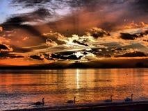 4 cygnes croisant dans le coucher du soleil Photos libres de droits