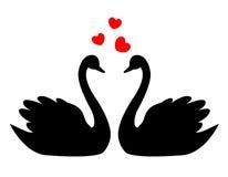 Cygnes dans l'amour Images stock