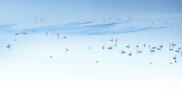 Cygnes dans le lac bleu Photos stock