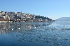 Cygnes dans une rangée en fondant l'eau glaciale Photos libres de droits