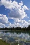 Cygnes de Jarun photo libre de droits