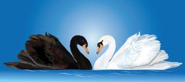 Cygnes noirs et blancs illustration de vecteur