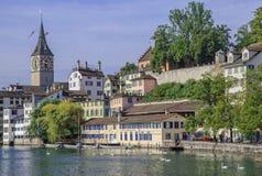 Cygnes sur la rivière de Limmat à Zurich Images libres de droits