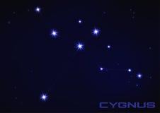 Cygnus constellation. Vector illustration of Cygnus constellation in blue Stock Photography