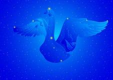 Cygnus da constelação ilustração stock