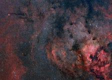 cygnus nebulosity Zdjęcie Royalty Free