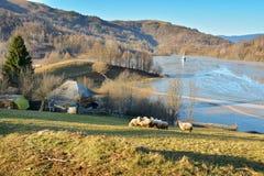 Cyjanek jezioro przy Geamana Rumunia Obraz Royalty Free