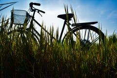Cykel i äng Arkivfoto