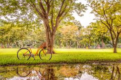 Cykel i parken Arkivfoto