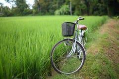 Cykel i ricepaddy, asia Arkivfoto