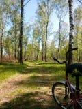 Cykel i skogen Arkivfoto