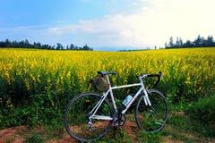 Cykel i trädgården Royaltyfri Fotografi