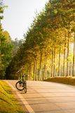 Cykel i trädgården Royaltyfri Foto