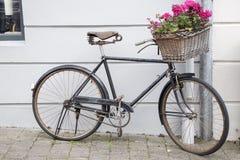 Cykel med blommor, Dingle Arkivbild