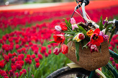 Cykel med den vävde korgen Royaltyfri Bild