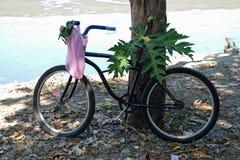 Cykel mot ett träd Fotografering för Bildbyråer