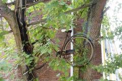 Cykel och stege i träd royaltyfri foto