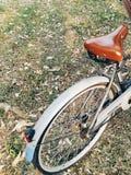 cykel och trädgård Royaltyfria Foton