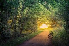 Cykel på en skogslinga Arkivbild