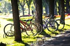 Cykel på parkera Royaltyfri Foto