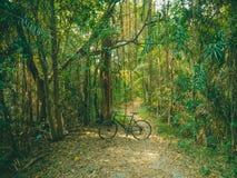05 - Cykel som cyklar i vildmarkskogen royaltyfri bild