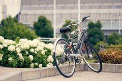 Cykel som parkeras i parkera, bland fälten av vanliga hortensian Bamen arkivfoton