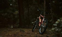 Cykel som vilas på träd i skog royaltyfri foto