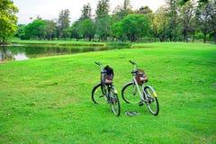 Cykel två i trädgården Royaltyfri Bild