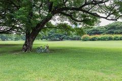 Cykel under stort träd Arkivbild
