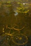 cykel under vatten Arkivfoto