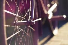 Cykel, vars eker skiner i strålarna av solnedgången arkivbilder