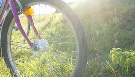Cykelanseendet på ett gräs i parkerar royaltyfria bilder