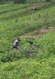 cykelfält Fotografering för Bildbyråer