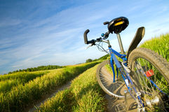 cykelfältsommar Arkivfoto