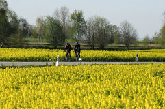 cykelfjädern turnerar Arkivbilder