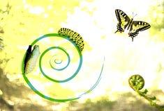 Cykl transformacja obrazy royalty free