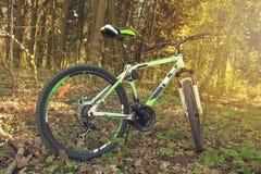 Cykla, fjädra, grönska, solcykel i träna i närbilden för öppen luft Arkivfoton