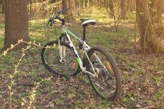 Cykla, fjädra, grönska, solcykel i träna i närbilden för öppen luft Royaltyfri Foto