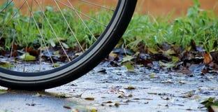 Cykla i regnet Arkivfoton