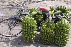 Cykla med bananer i Afrika Arkivbild