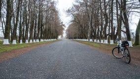Cykla på vägen bland träden, Poti, Georgia royaltyfria bilder