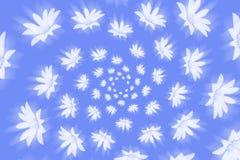Cykla skinande vita blommor på en blå bakgrund Arkivbilder