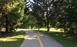 Cykla vägen i skog Arkivbilder