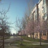 Cykla våren i Madrid royaltyfria foton