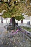 Cyklar på universitetsområde Royaltyfria Bilder